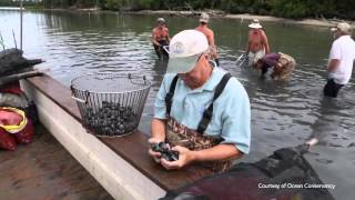Oyster Farmer's Under Threat From Ocean Acidification | Video
