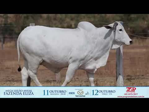 LOTE 226 1