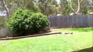 """Houses for Sale in Gold Coast"" Edens Landing House 4BR/2BA by ""Gold Coast Property Management"""