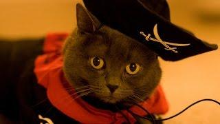 Кошки разбойники 4 ч.  К приготовлению готов! Новые приколы кошек.
