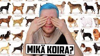 Testaa Mikä Koirarotu Sopii Sinulle? (TESTI)   Luetaan Kommentteja