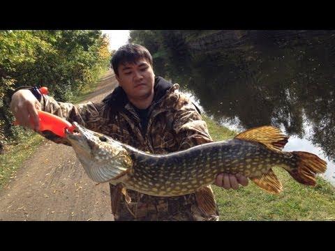 Pike (9lbs.) Fishing Leeds & Liverpool Canal.