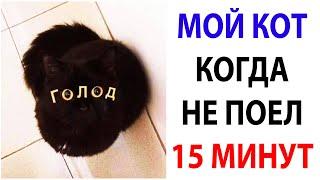 Мемы и Приколы с Котами 2021 года. Подборка смешные мемчики про котов за 18 Октября #shorts