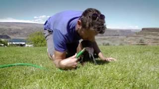 Star Puppy Training with Brett Eldredge - Watershed 2016