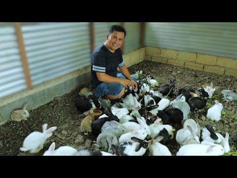 Harvesting hundreds of chicken eggs & Feeding all my farm animals ( FARM TOUR ) Rest in peace TIKLOY