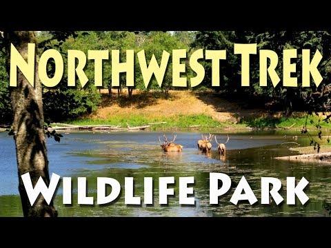 NW Trek Wildlife Park - Washington