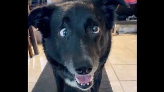 Funny dogs 13 Смешные собаки приколы с собаками Coub TikTok