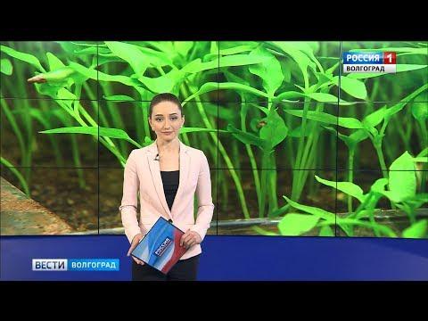 Вести-Волгоград. Выпуск 12.03.19 (17:00)