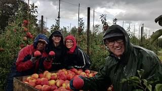 Fruitoogst 2019 - De Woerdt Ressen