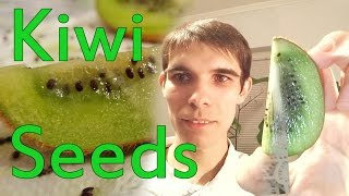 Cum sa plantezi kiwi din seminte / How to plant kiwi from seed
