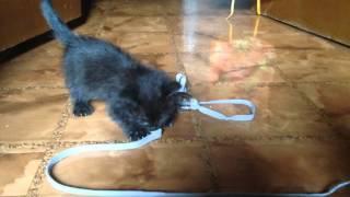 Маленький игривый черный котенок