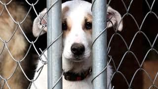 В Германии собачьи приюты прекращают отдавать животных на праздники. И вот почему!