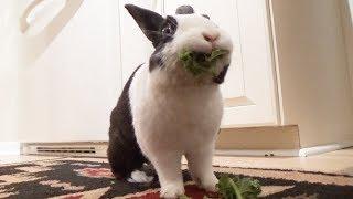 Rabbit hearing test!