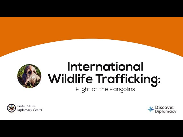 Wildlife Trafficking Diplomatic Simulation: Convention on International Trade in Endangered Species