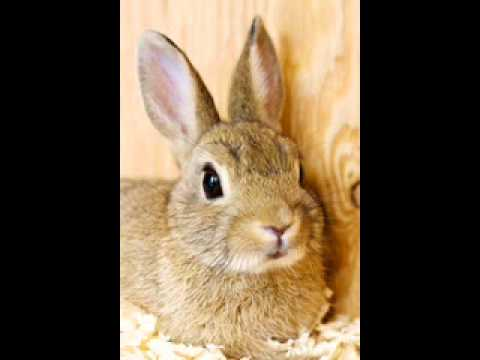 "Pet Photo Fun ""Bunny"" Birthday To You Song"