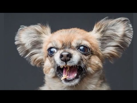 Peanut Butter Helps Shatter Myths About Aggressive Breeds | DOGS YOU SHOULD KNOW ABOUT