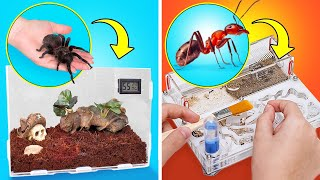 How to Build Perfect Ant Farm And Spider Terrarium At Home