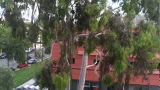 Caltech Campus, Pasadena, California View in October