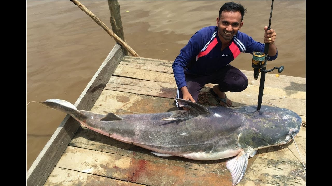 Piraiba Fishing In Suriname My First Piraiba Lau Lau 2 08 M Youtube