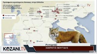 Περίπου 100 κρούσματα λύσσας στη χώρα από το 2012
