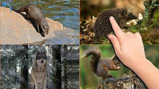 Животные для малышей (на русском языке)