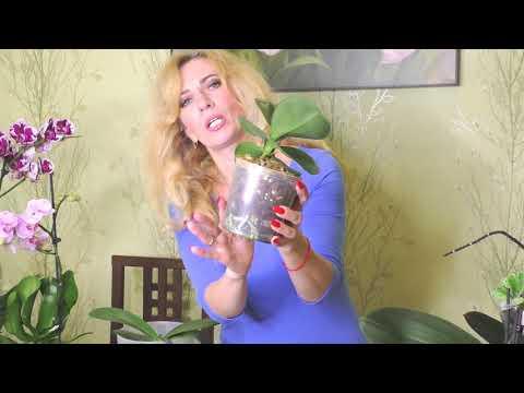 Как удобрять орхидеи золой
