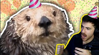 I threw a terrible birthday party for a sea otter