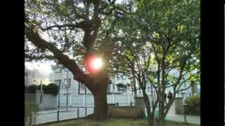 撮影 koseoyaji.