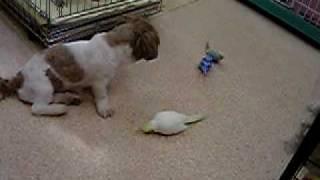 名古屋市にあるブリーダーショップ「池ペットショップ」。 犬と小鳥の共...