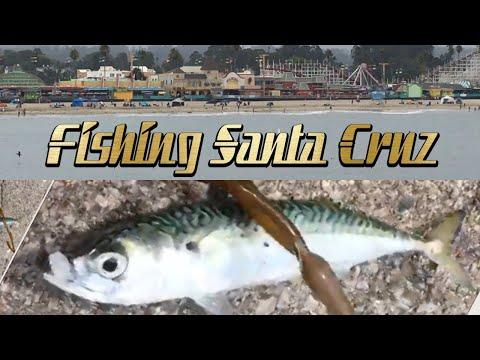 Santa Cruz Mackerel