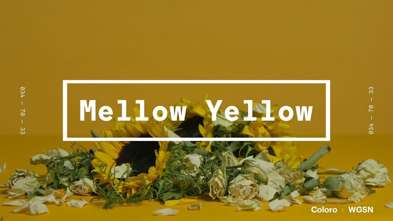 Coloro x WGSN key colors 2020: Mellow Yellow 2