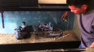 Setting Up A 55 Gallon Fish Tank