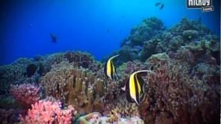Stora Barriärrevet, Australien
