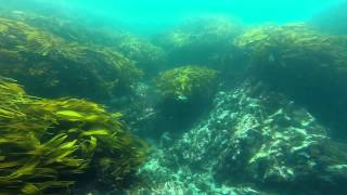 Spearfishing / Freediving New Zealand, Whangarei