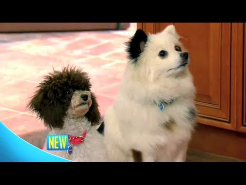 Dog With a Blog -