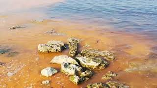 Chiazze rossastre che stanno colorando il mare di Bisceglie