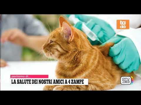 Tartufi cani gatti cavalli e cucina youtube for Youtube cani e gatti