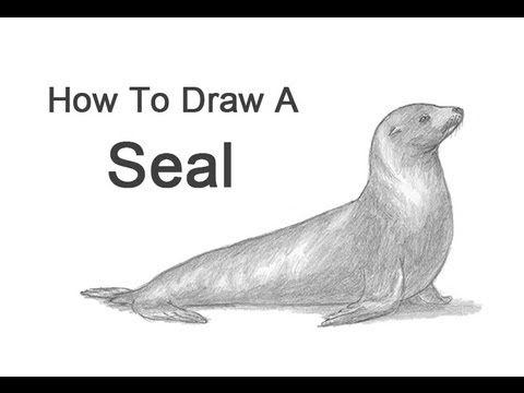 How to draw a seal sea lion youtube how to draw a seal sea lion publicscrutiny Images