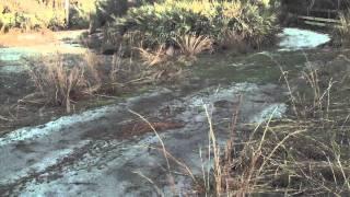 Stone Guided Bow Hog Hunts - Lake Wales, Florida - Walker