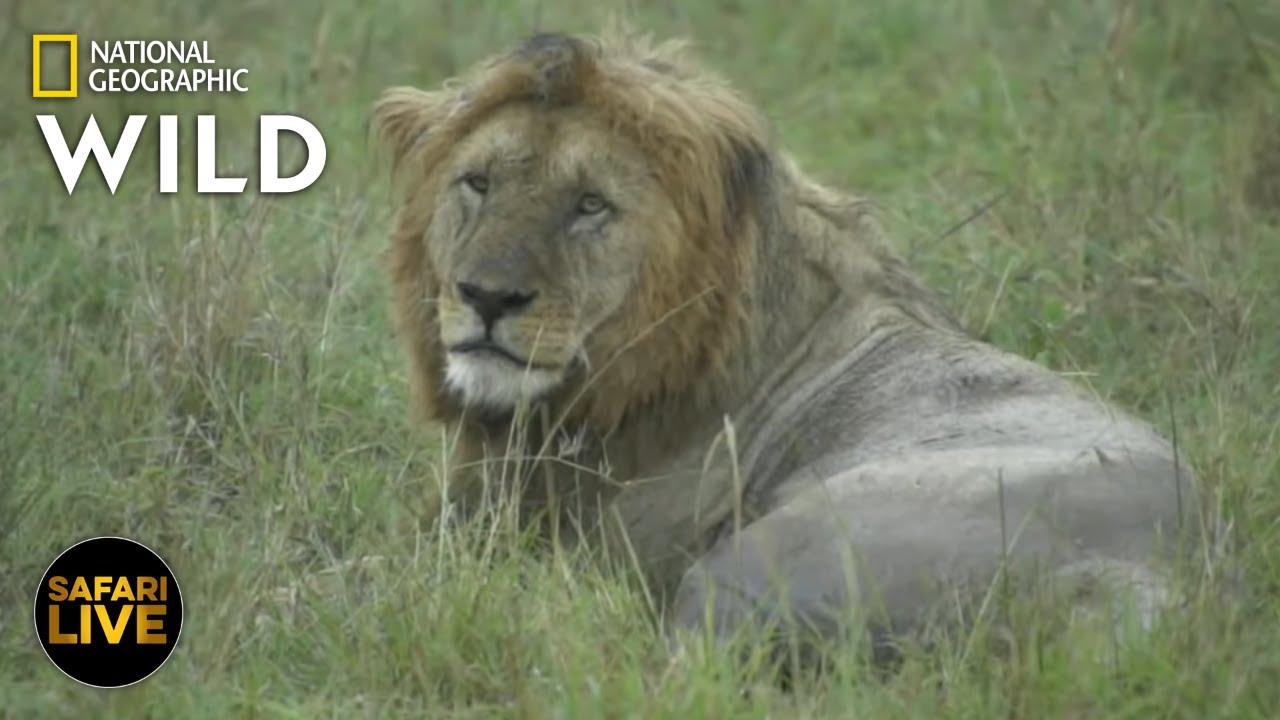 Safari Live - Day 275 | Nat Geo Wild