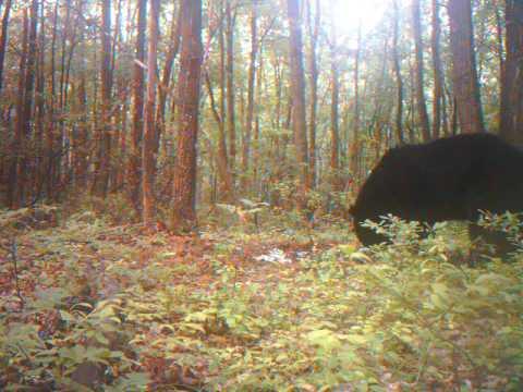 bear vids on mia lane 6-30-10 011.AVI