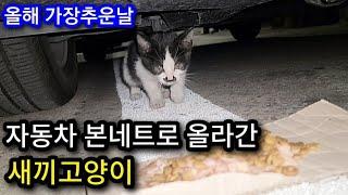 올해 가장추운날 자동차 본네트로 올라간 아기고양이