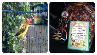 Lovebird JUARA Nasional 2016