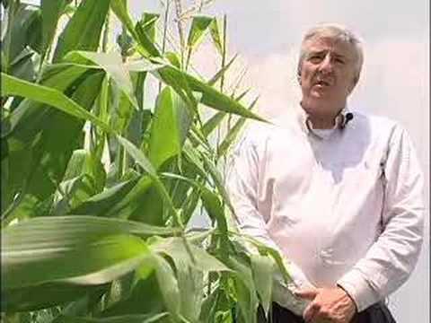 Louisiana Farm Bureau: Farming at Angola