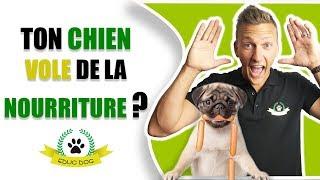 Comment Faire Mon Chien Vole de la Nourriture !!! (PETIT JEU A FAIRE)