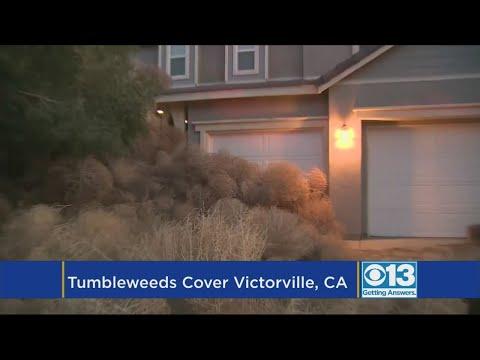 Tumbleweeds Bury Neighborhood Of California Town