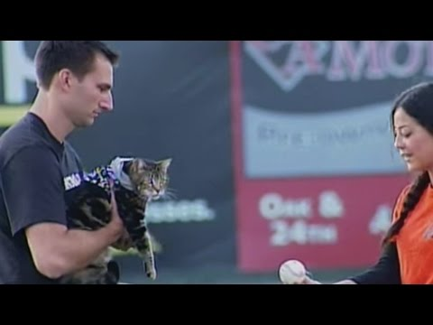 Tara the hero cat throws out first pitch at the Bakersfield Blaze game