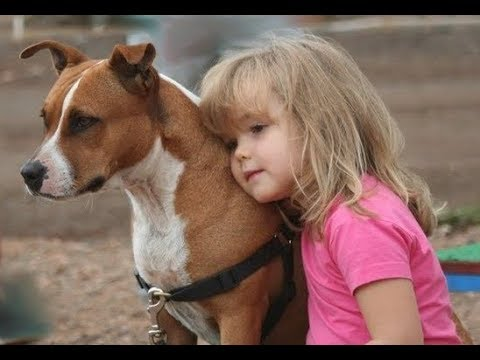 Pitbull Dogs Protecting Kids Compilation –  Dog and baby Videos