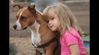 Pitbull Dogs Protecting Kids Compilation -  Dog and baby Videos