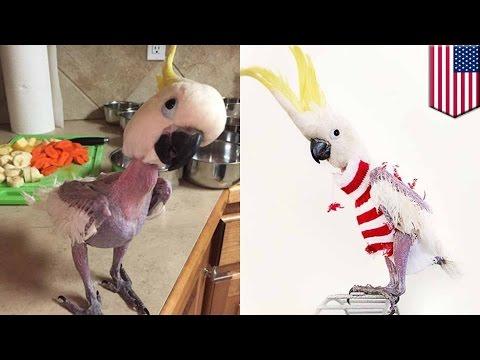 parrots dating
